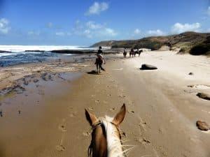 Horse riding trek-île du Nord